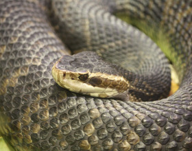 Florida Woman Shoots At Venomous Snake, Ends Up In Jail