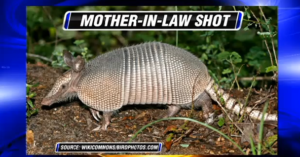 Know What's Behind Your Ricocheting Bullet After It Bounces Off The Armadillo
