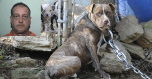 Permit Holder Charged After Shooting Chained Up Pit Bull, Self-Defense Claim Doesn't Hold Up