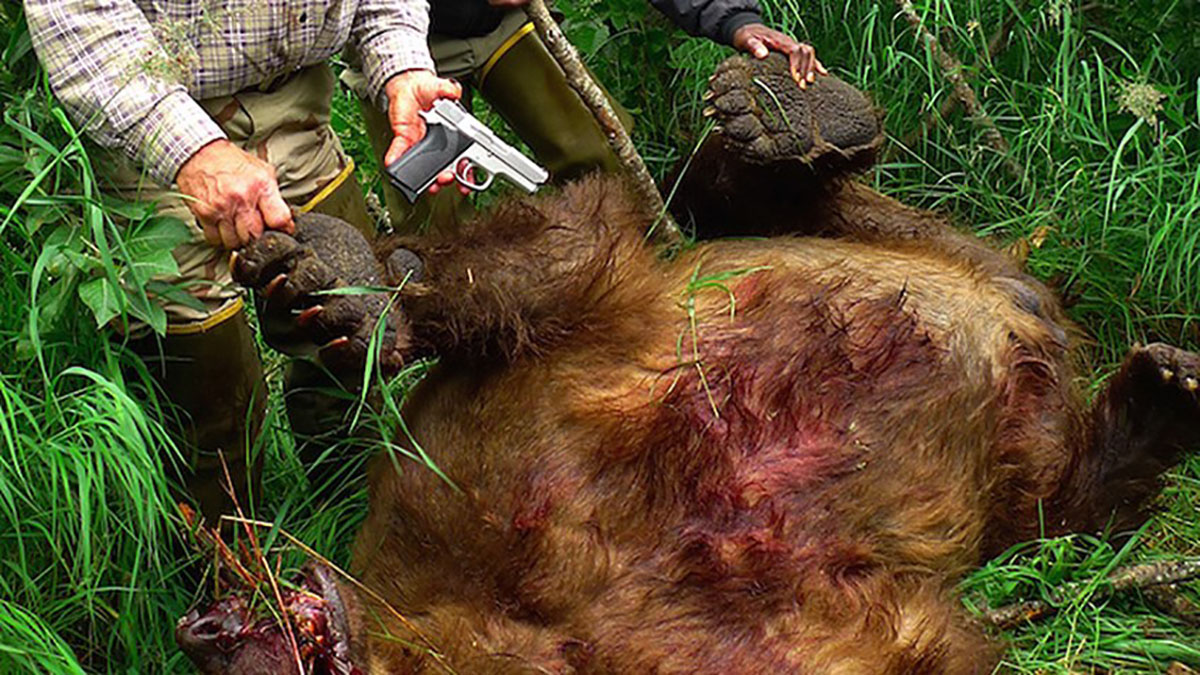 Grizzly Bear Vs 9mm: The Caliber Debate Gets Ruined For Many
