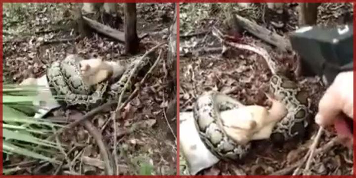Python shot naples fl goat