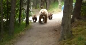 [VIDEO] Hiker Comes Face To Face With Mama Bear And Cubs On Trail; Why A Gun Is A Last Resort