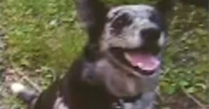 Neighbor Shoots And Kills Dog, Family Wants Justice