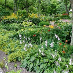 Stock garden 1