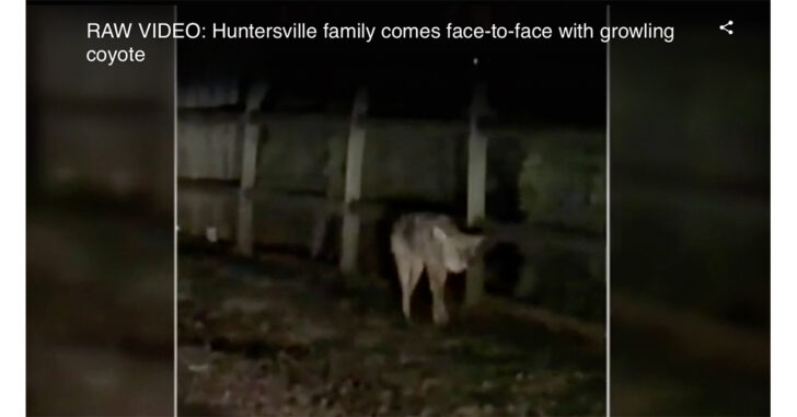 North Carolina Man Shoots Coyote That Threatened His Daughter, Dog