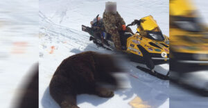 *WARNING: EXTREMELY GRAPHIC* Father Survives Horrific Bear Attack After Son Uses Gun To Stop It