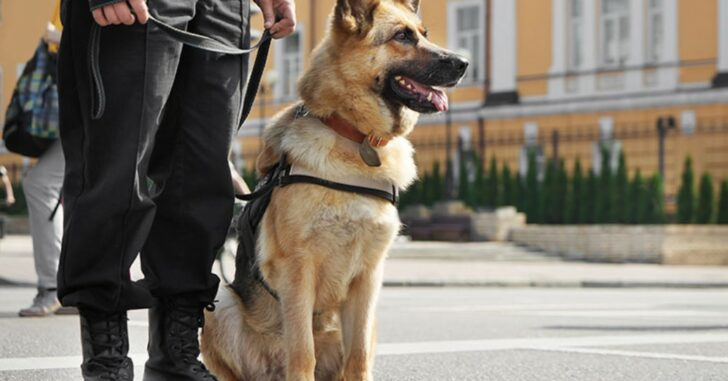 Houston Malls Employ Gun-Sniffing Dog To Weed Out Concealed Carriers
