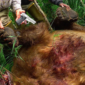 Grizzly Bear Vs 9mm: The Caliber Debate Gets Ruined For Many People